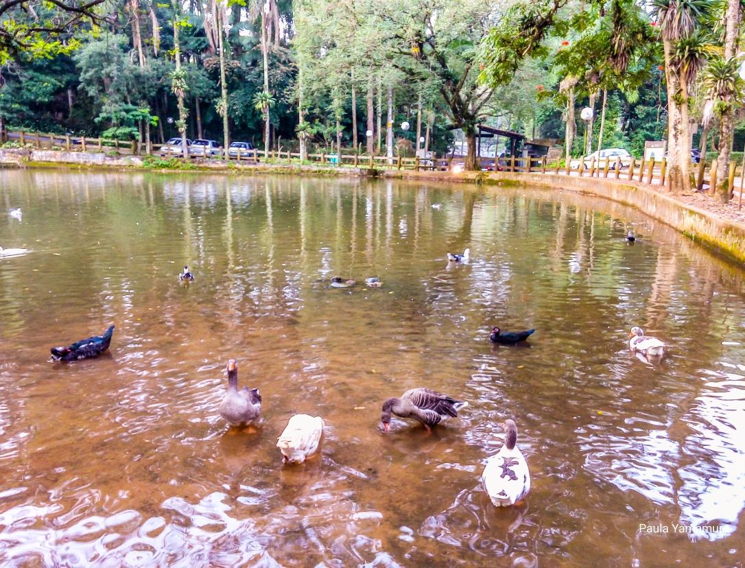 2017.05 Jaguará lago