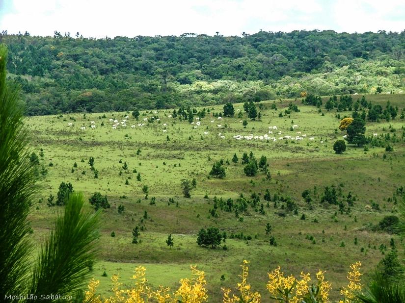 Trilha da Cachoeira (Vale do Itararé)