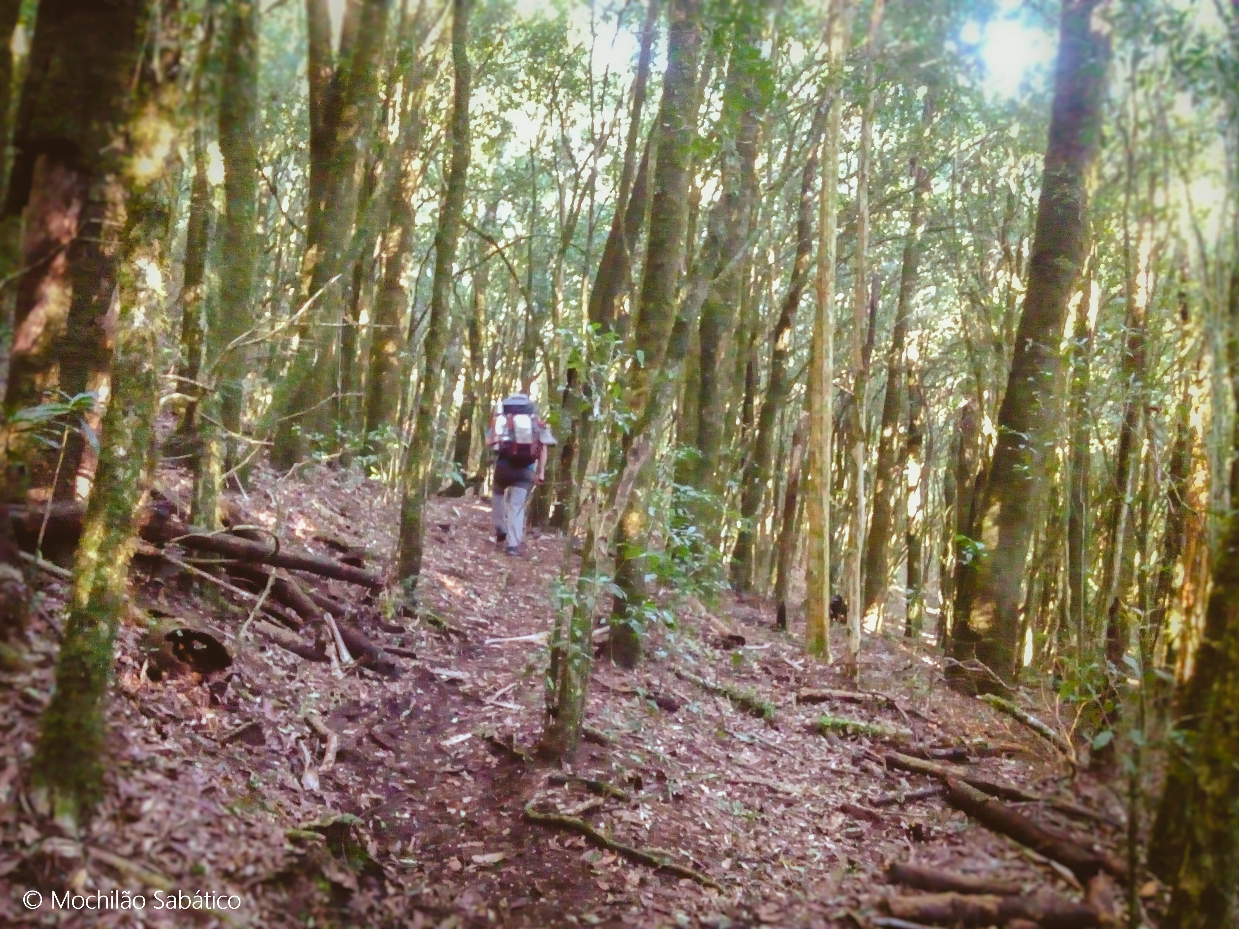 Trilha do Jorge, saindo do Pico da Onça em direção à Monte Verde