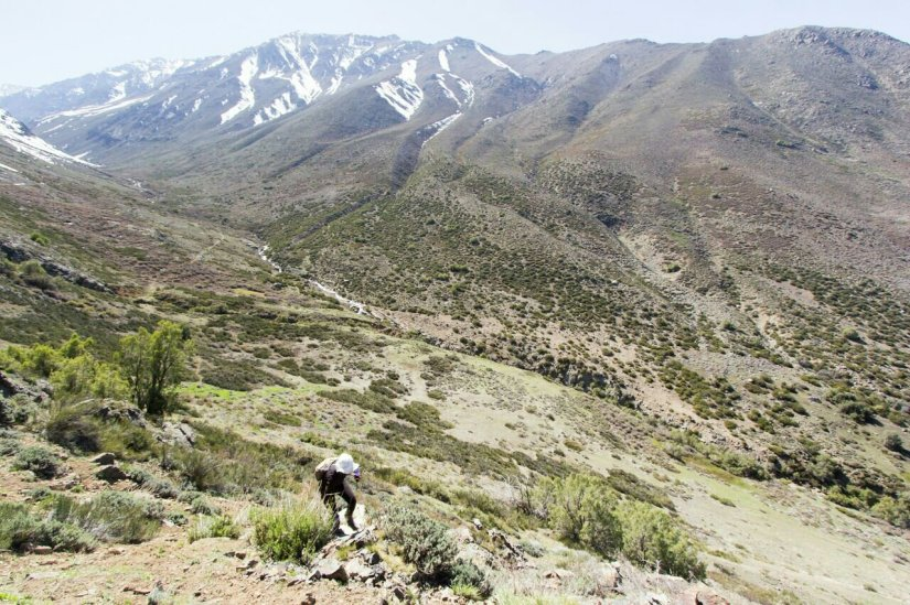 Yerba Loca santiago Chile