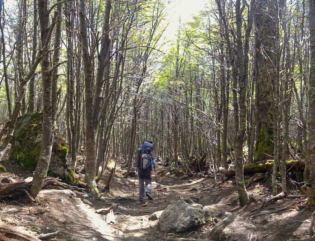 laguna_esmeralda_ushuaia_bosque-277119401.jpg