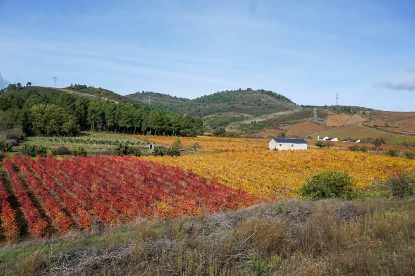 Viticultura_Caminho de Santiago de Compostela