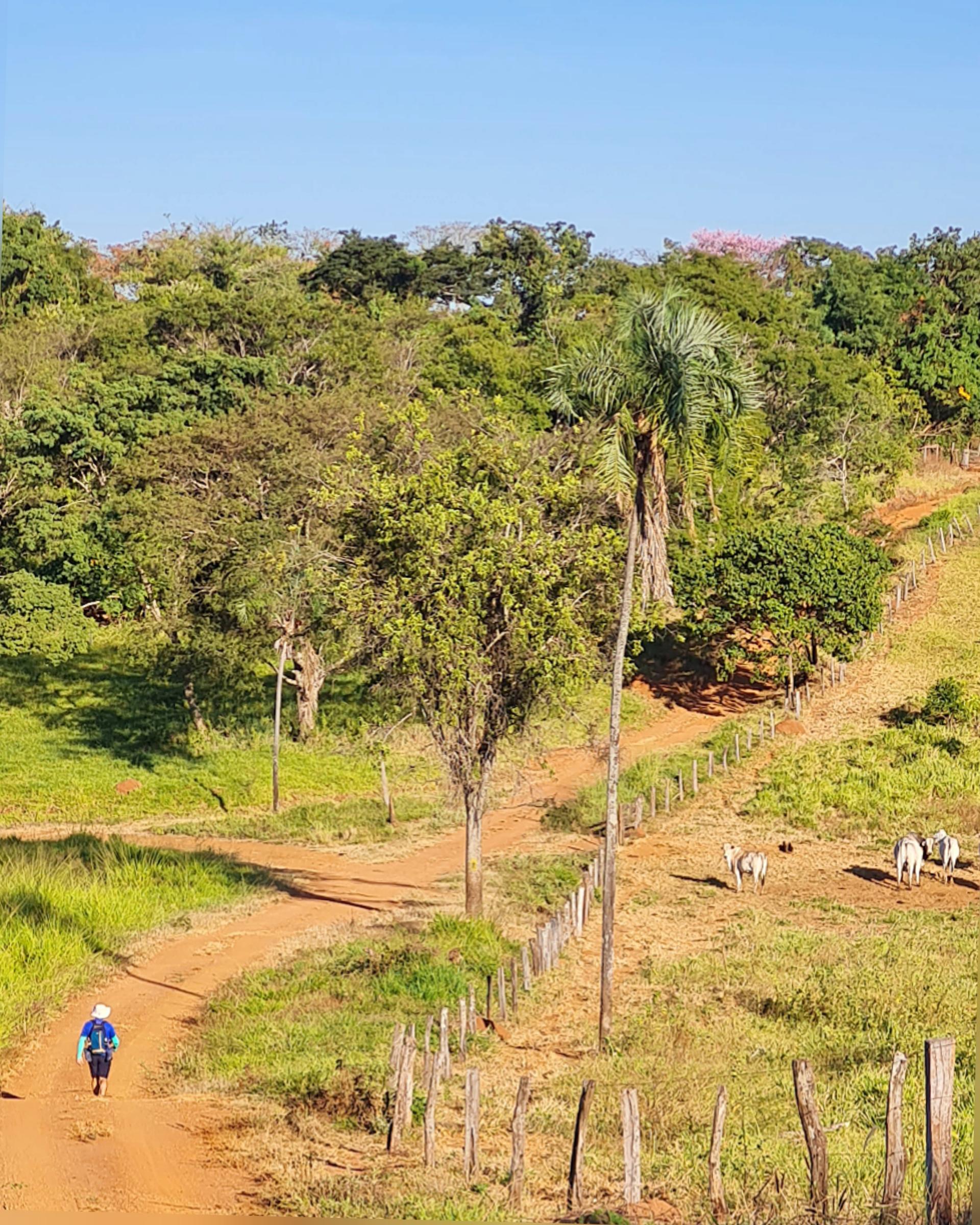 Caminho de Cora Coralina_Itaguari